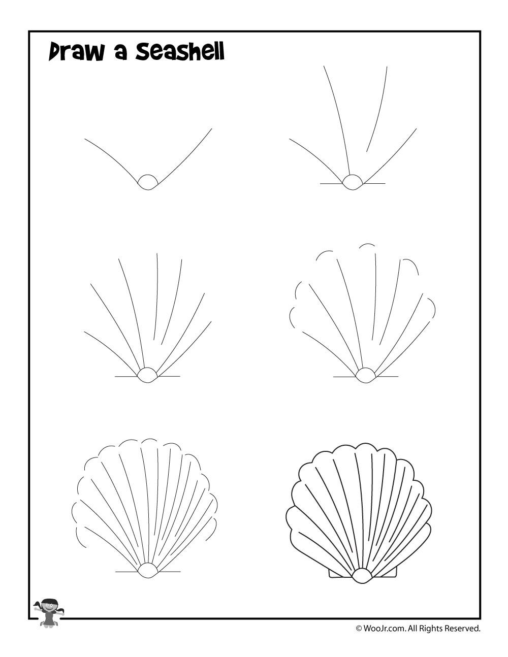 How To Draw A Seashell : seashell, Seashell, Activities