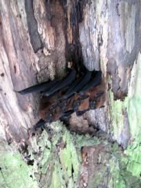 Canoe under bats under a log.