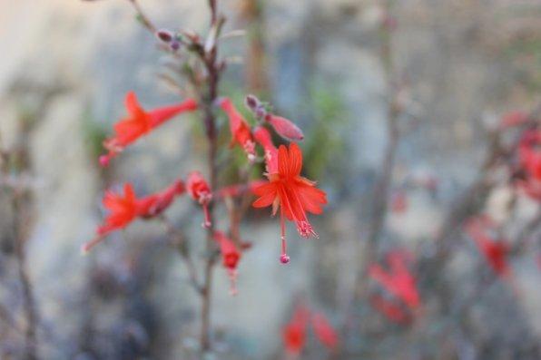 Mountainside flower