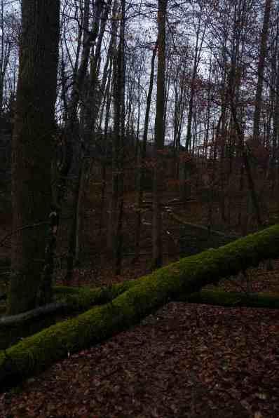 winter2015_turnier_041