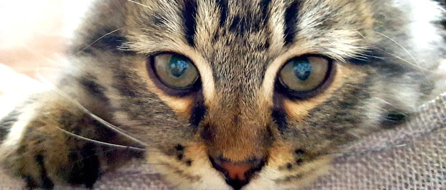 On célèbre la Journée nationale des propriétaires d'animaux