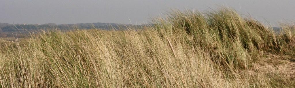 Riet, Reeds, air, water