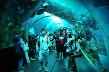 Sea Aquarium Woopa Emart Singapore Attraction Tickets