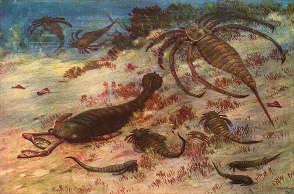 Image result for eurypterid