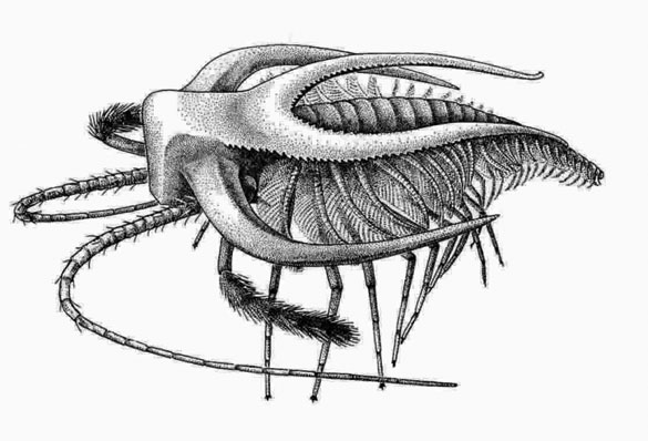 Wooster Geologists » Blog Archive » Wooster's Fossil of