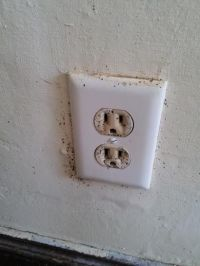 Bed Bug Poop On Wall