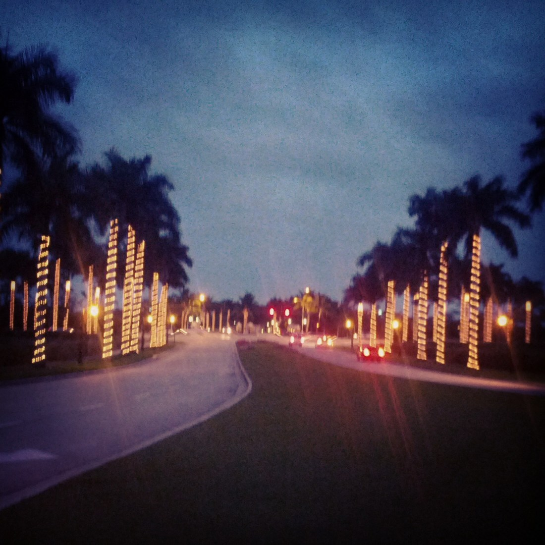 blurry path with lighted palm trees