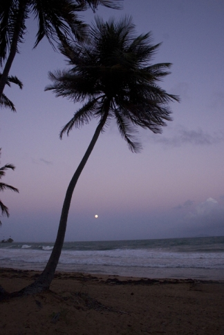 Moonrise by Melabee M Miller