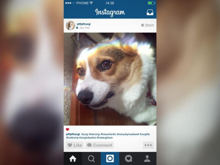 Corgi Instagram Influencer Not Even Grateful For Owner Buying Followers