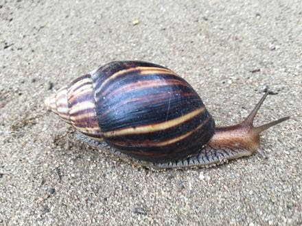 snail-picture