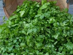 Worden Farm CSA crops-4007