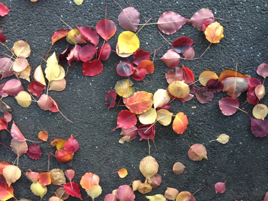 autumns leaves on the pavement