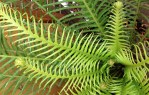 POtted fern 2