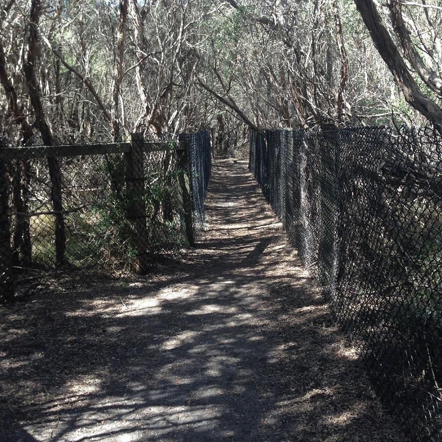 Pathway through the tea tree