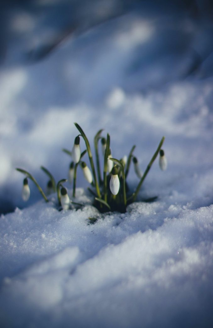 Spring Pun