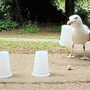 Three Cups and a smart Seagull