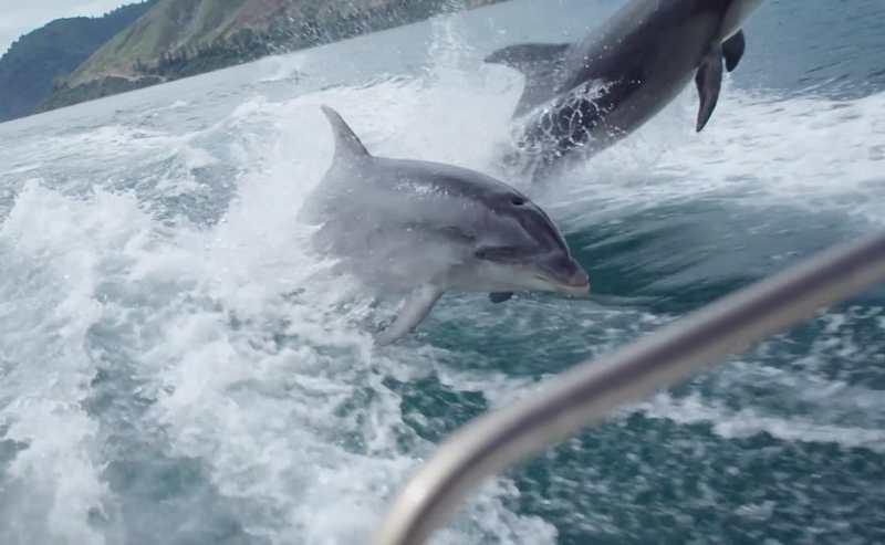 Bildergebnis für Delfine