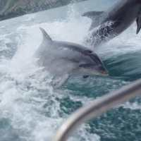 Breathtaking Slowmotion Video of Dolphins