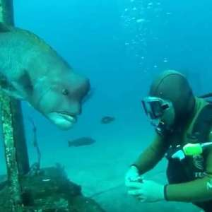 Diver's 25-year Friendship with a Fish