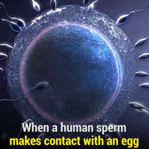 The moment a Sperm makes contact with an Egg