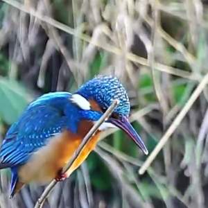 The amazing Bird that keeps its Head Still while fishing