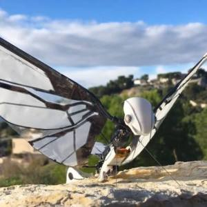 MetaFly- biomimetic controllable creature
