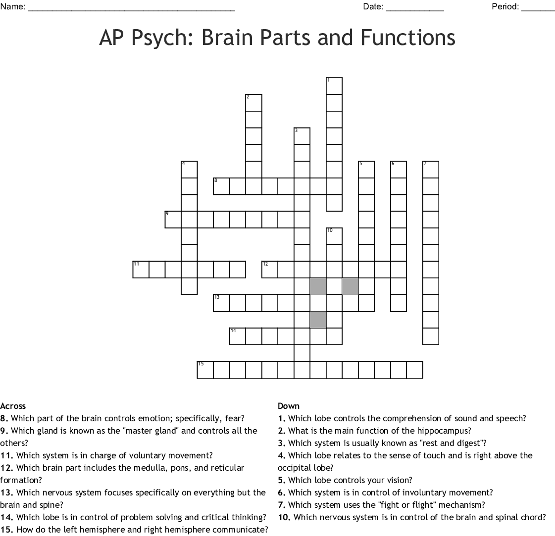 Parts Of The Brain Crossword
