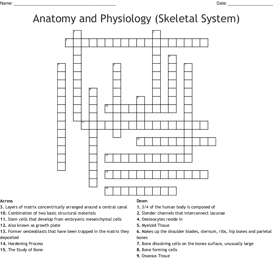 Anatomy And Physiology Skeletal System Crossword