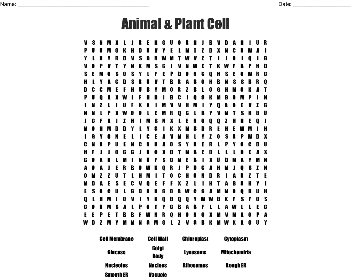Plant And Animal Cells Word Search