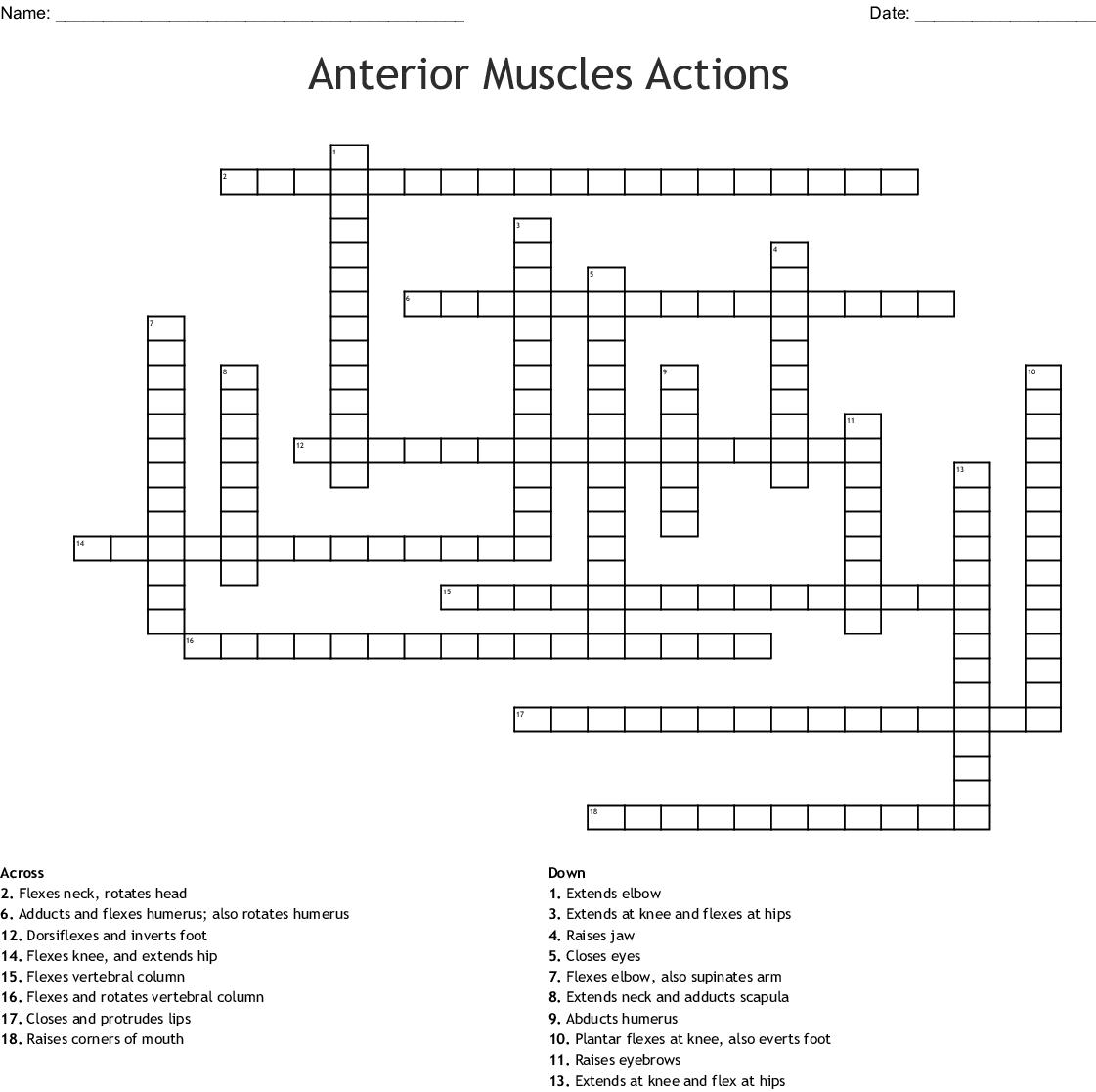Muscle Matching Worksheet