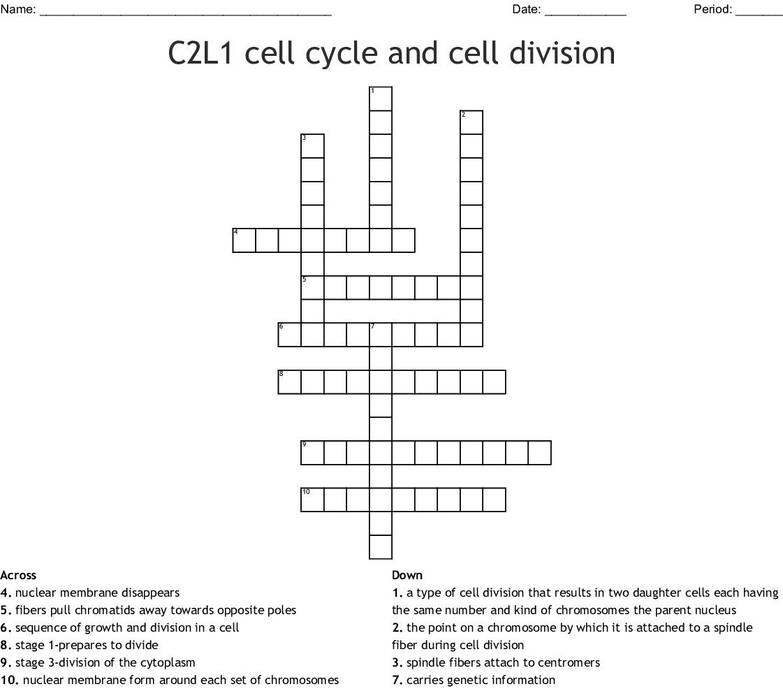 hight resolution of c2l1 cell cycle and cell division crossword