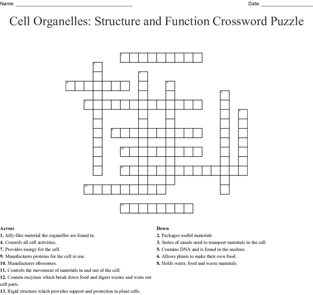 medium resolution of Cells And Cell Organelles Worksheet Answers - Promotiontablecovers