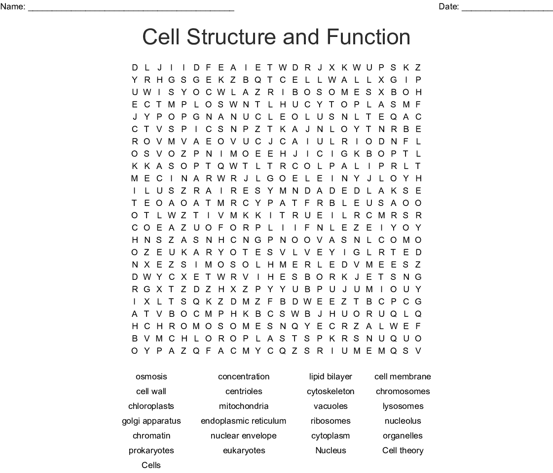 Cell Theory Worksheet Answer Key