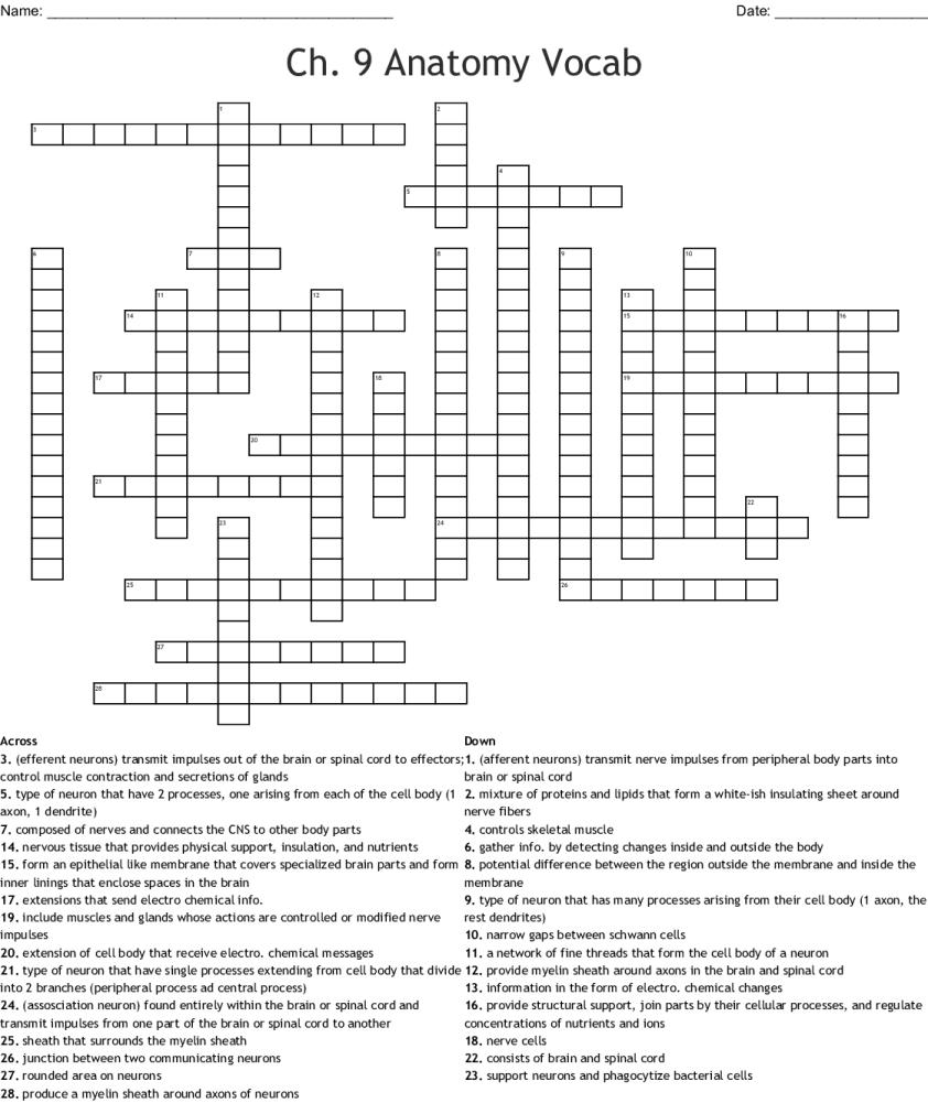 Anatomy Arcade Digestive System Crossword Answers ...