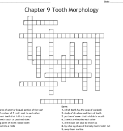 chapter 9 tooth morphology crossword [ 1121 x 1011 Pixel ]