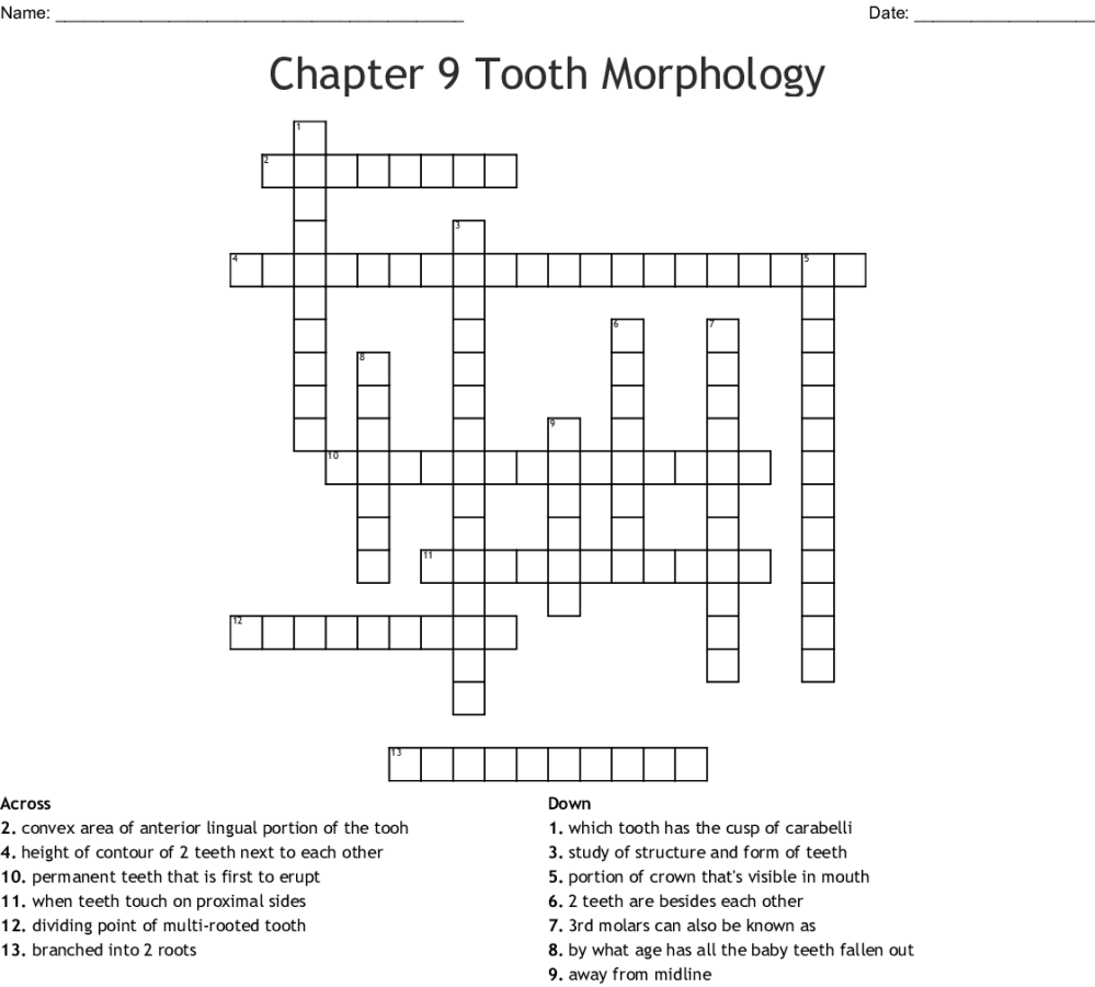 medium resolution of chapter 9 tooth morphology crossword