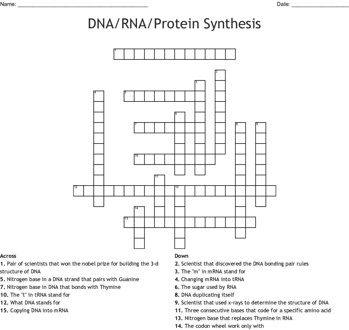 Dna Rna Protein Synthesis