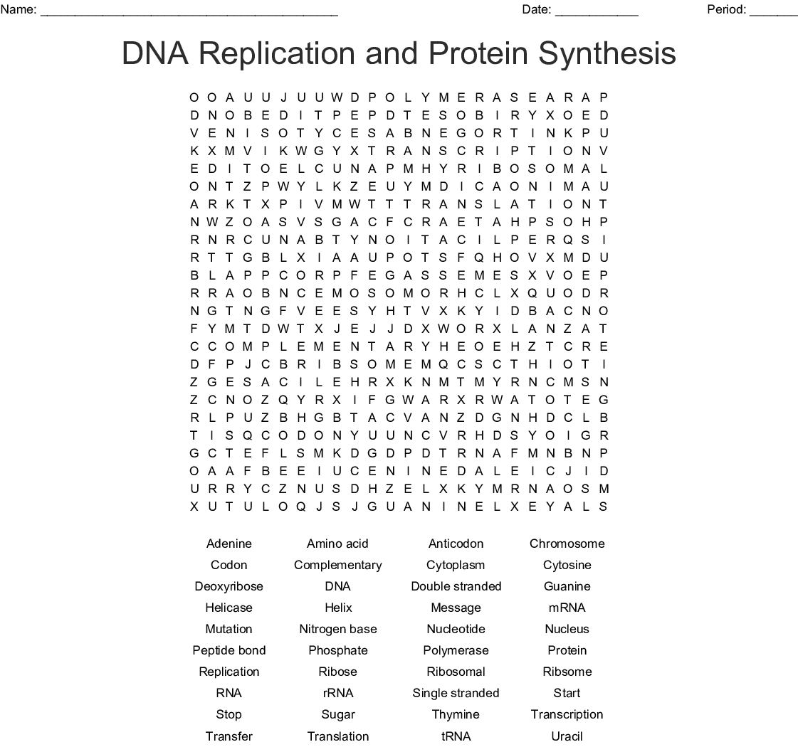 Dna Replication And Protein Synthesis Word Search
