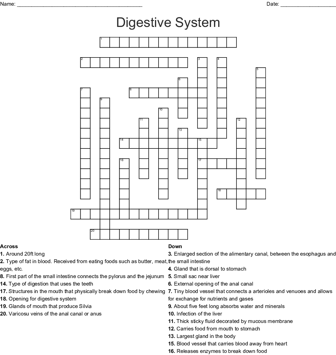Human Digestive System Crossword