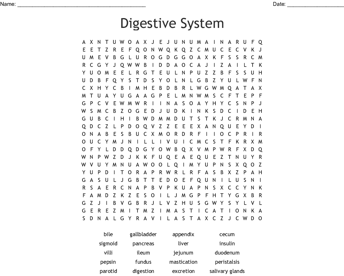 The Digestive System Word Search