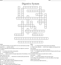 Digestive System Worksheet 3rd Grade   Printable Worksheets and Activities  for Teachers [ 1211 x 1121 Pixel ]