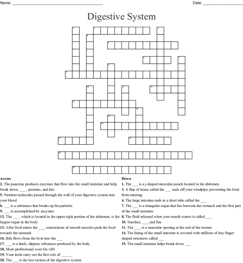 small resolution of Digestive System Worksheet 3rd Grade   Printable Worksheets and Activities  for Teachers