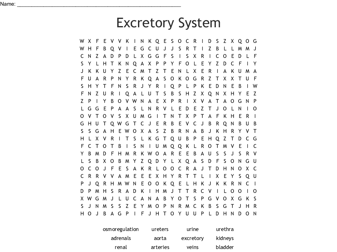 Excretory System Word Search