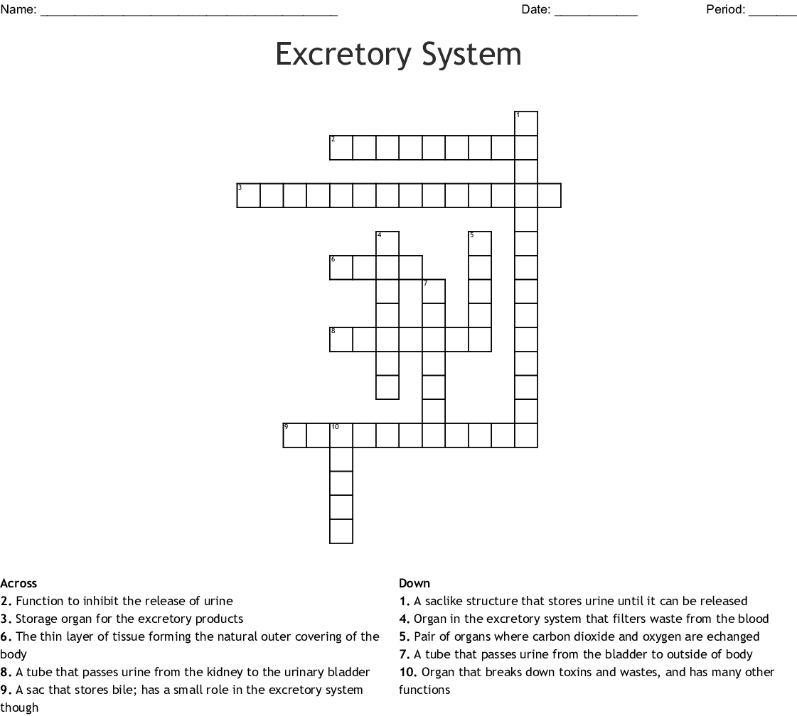 Urinary System Crossword