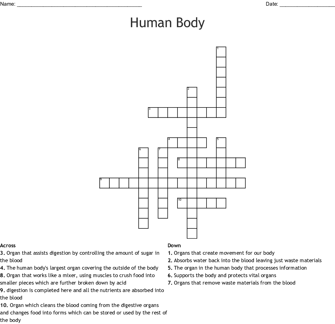 Human Body Crossword