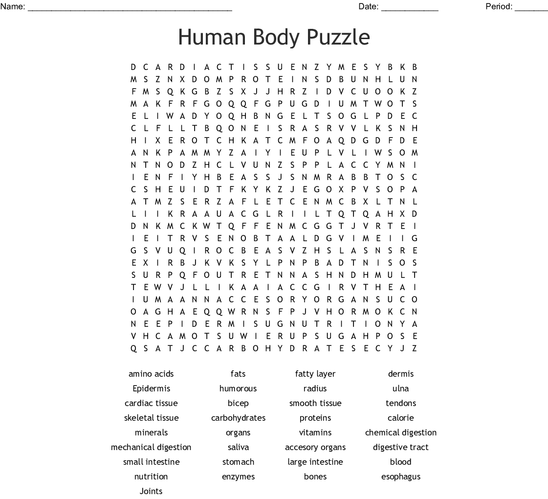 The Body Systems Word Search
