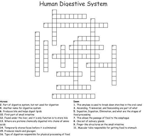 small resolution of printable disney world maps: Digestive System Diagram Crossword Answer Key