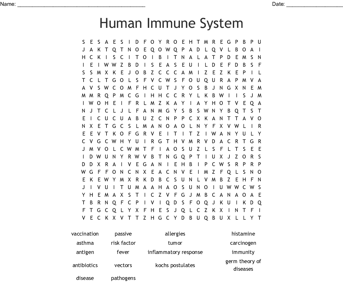 The Healthy Immune System Worksheet Answers