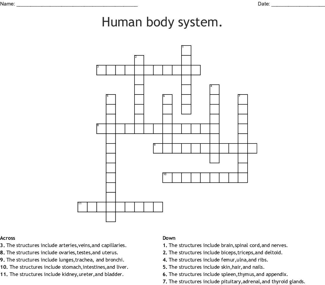 Human Body System Crossword