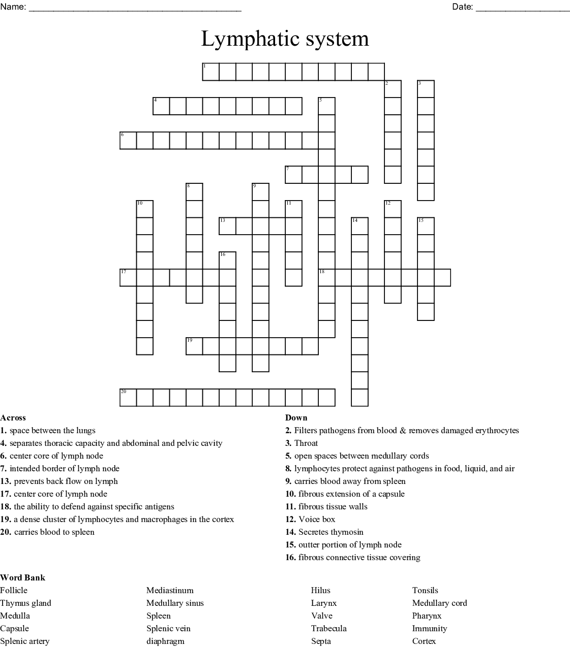 Lymphatic System Crossword